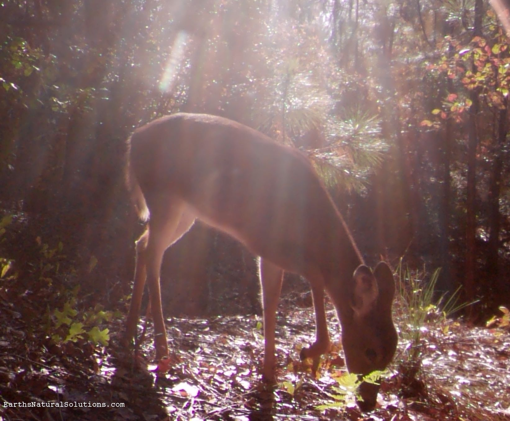 deer_pic31