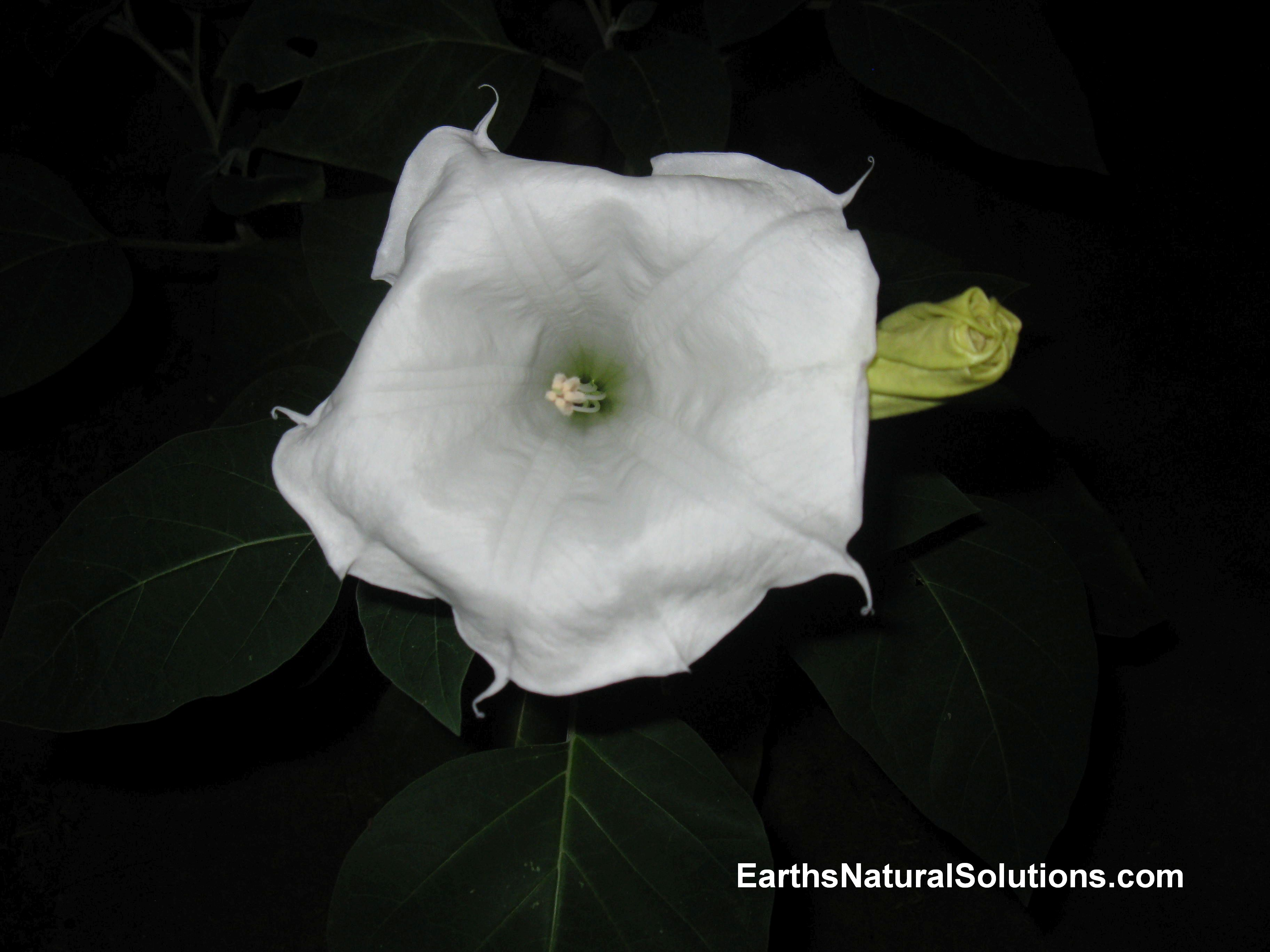 Earths natural Solutions